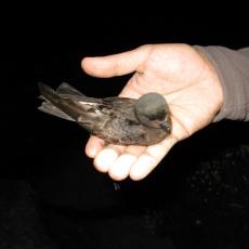 aves 3