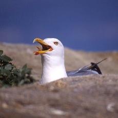 aves 9